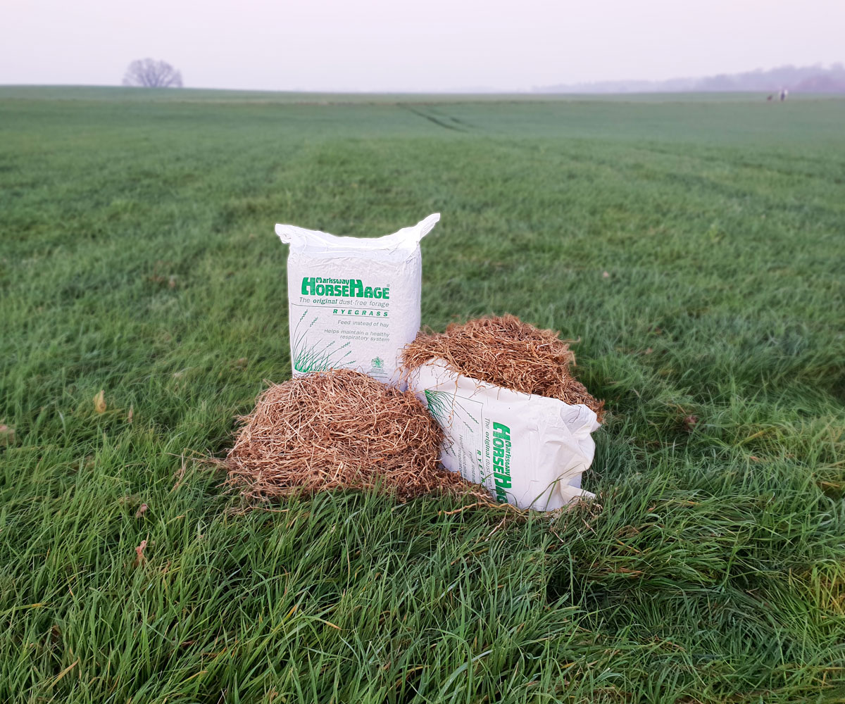 HorseHage Ryegrass Produktbild